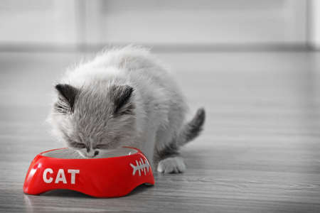 Cute little kitten eating from red bowl at home