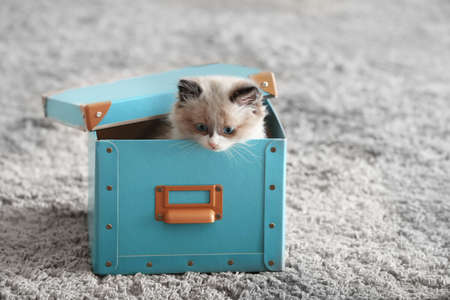 Cute little kitten in box at home