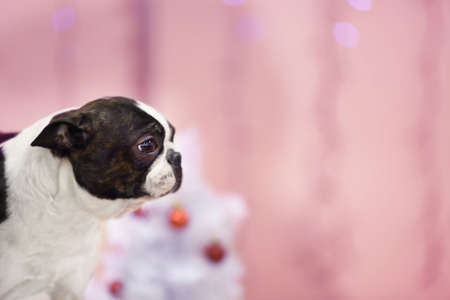 Cute funny dog on blurred background Stock Photo