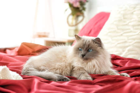 Cute funny cat lying on bed at home Stock Photo