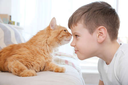 Cute little boy with red cat at home