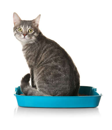 Cute cat in plastic litter box isolated on white
