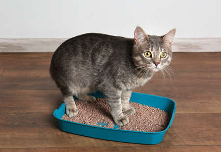 Cute cat in plastic litter box on floor Imagens