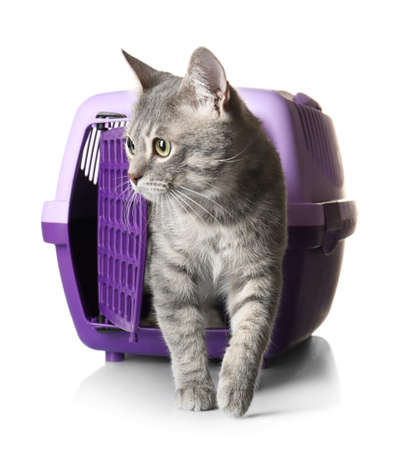 Cat in carrier box on white background