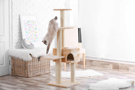 Lindo gatito en árbol de gato en casa
