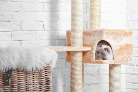 Nette Miezekatze auf Kratzbaum zu Hause