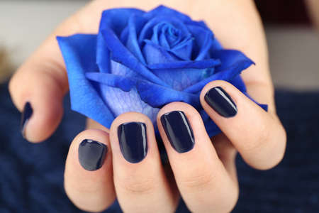 Nail art concept. Beautiful female hand with neat manicure holding blue rose Stock Photo