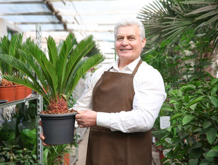 Male florist taking care of plants in greenhouse