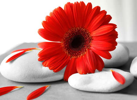 Spa stones and gerbera on gray table