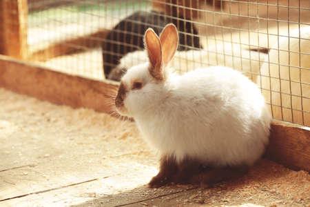 Cute funny rabbit in zoological garden Фото со стока