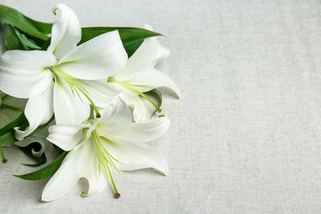 Beautiful lilies on fabric background