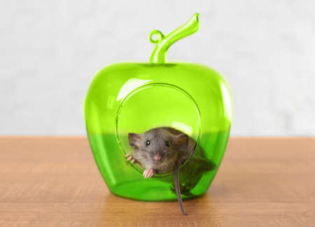 Cute funny rat and decorative apple on table at home Stock Photo
