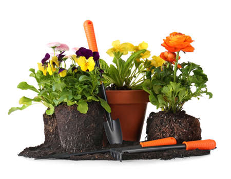 Composition with beautiful plants and gardening tools on white background