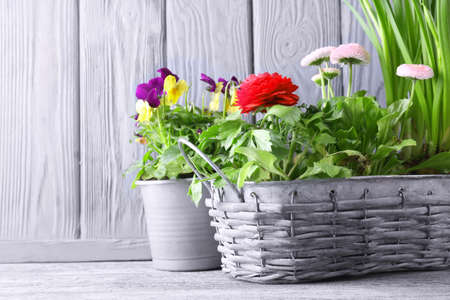 Composition with beautiful plants on wooden background