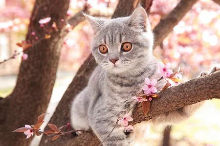 꽃이 만발한 나무 야외에 귀여운 고양이 % 00