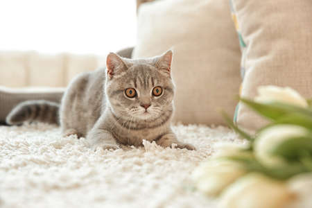 Cute cat lying on white rug near tulips in light room Фото со стока