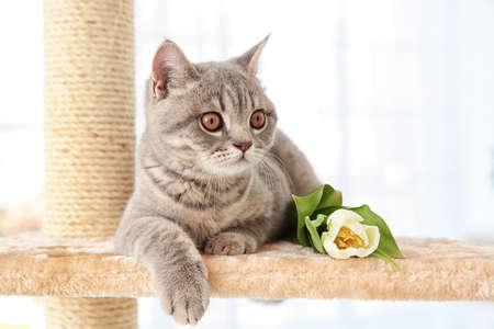 明るい部屋にチューリップで爪のシャープナーの上に横たわっているかわいい猫