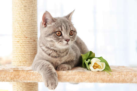Cute cat lying on claw sharpener with tulip in light room Stock Photo