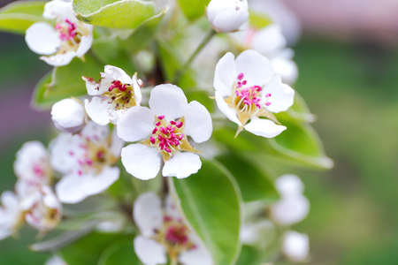 Branch of blooming tree flowers on blurred background Stock Photo
