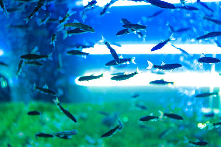 Aquarium with fish for pedicure in modern beauty salon