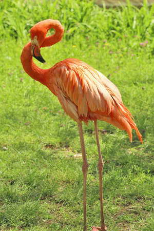 Beautiful flamingo in zoological garden Banque d'images - 97878283