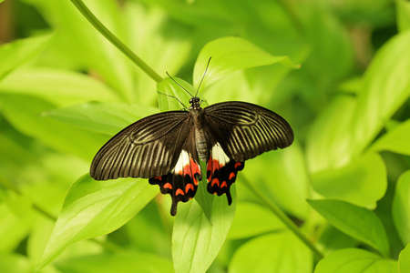 Beautiful butterfly in zoological garden Imagens