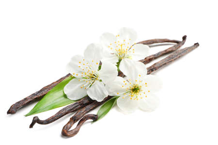 Dried vanilla sticks and flowers on white background Stock Photo