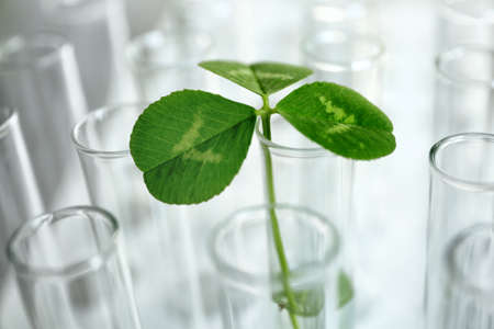 Plant in test tube, closeup