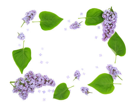 Composition of beautiful lilac flowers on white background