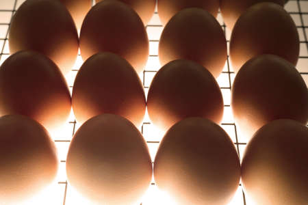 Grill with eggs in incubator, closeup