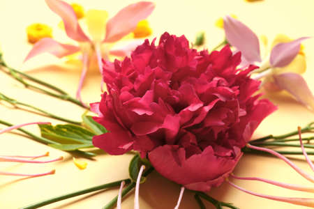 Beautiful flower composition on color background