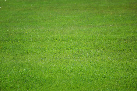 Green grass on golf course in sunny day