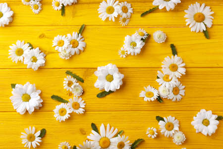 Composition with beautiful chamomile flowers on color wooden background
