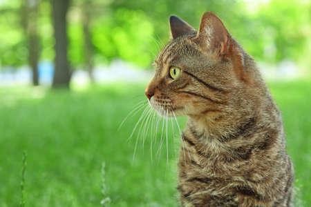 Cute tabby cat in park