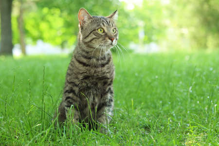 Cute cat sitting on green grass in park Stock Photo