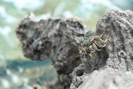 Small crab on rock at sea resort Archivio Fotografico