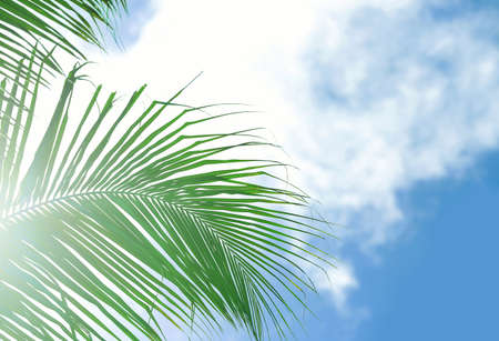 Leaves of tropical coconut palm against blue sky