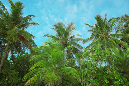 View of beautiful tropical palms against blue sky Stock Photo