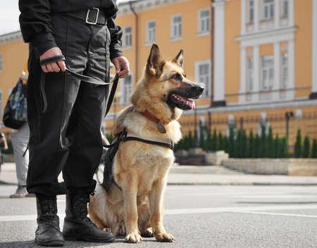 屋外に座っているスマート警察犬