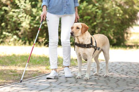 Guide dog helping blind woman in park 스톡 콘텐츠