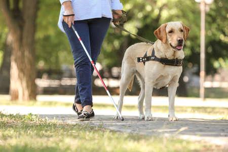 Blindenhund, der blinder Frau im Park hilft
