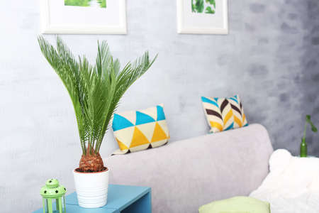 Tropical palm with bright green leaves near couch in living room Stock Photo