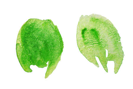 Green watercolor stains on white background