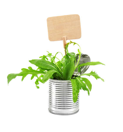 Young green plants with nameplate in tin can isolated on white. Recycling garbage concept Stock Photo