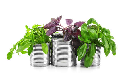Young plants in tin cans isolated on white. Recycling garbage concept