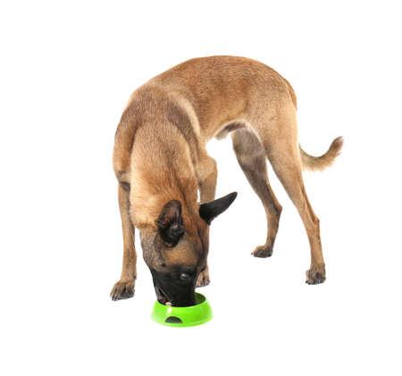 Perro comiendo del tazón, aislado en blanco. Concepto de voluntariado y refugios de animales. Foto de archivo