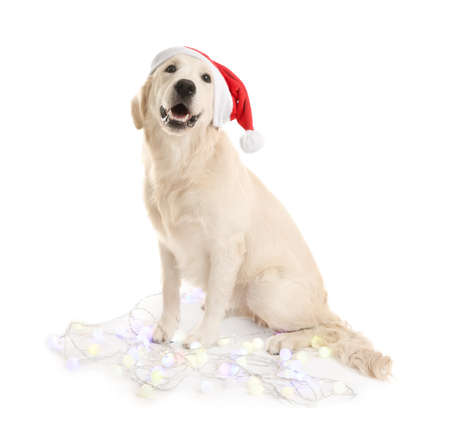 Cute dog in Santa hat sitting with Christmas lights on white background 스톡 콘텐츠