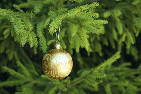 Christmas ball hanging on fir tree branch Stock Photo