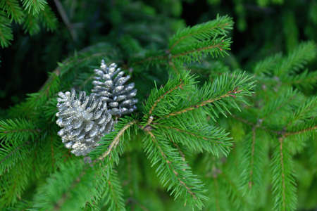 Christmas tree branch decorated with silver cones, closeup