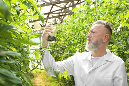 Mature farmer holding flask with soil in greenhouse